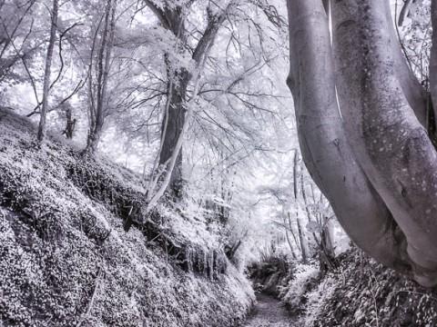 Sentier de randonnée de Royon en DRI infrarouge