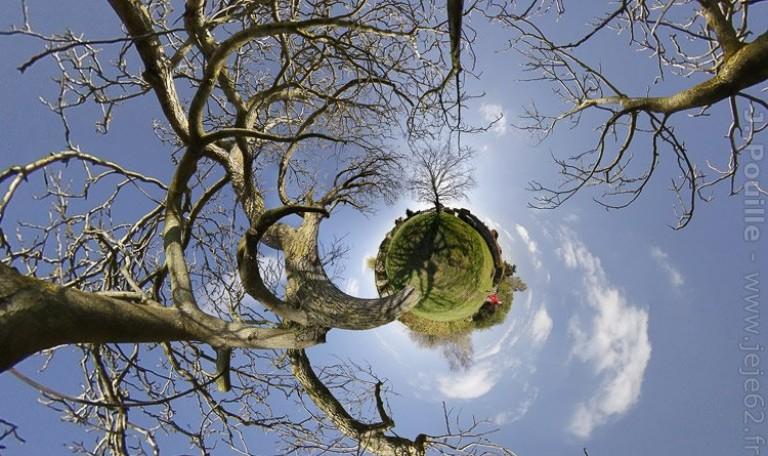 Un arbre sur une petite planète