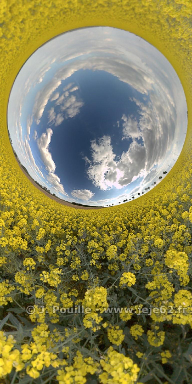 Petite planète inverse de Colza