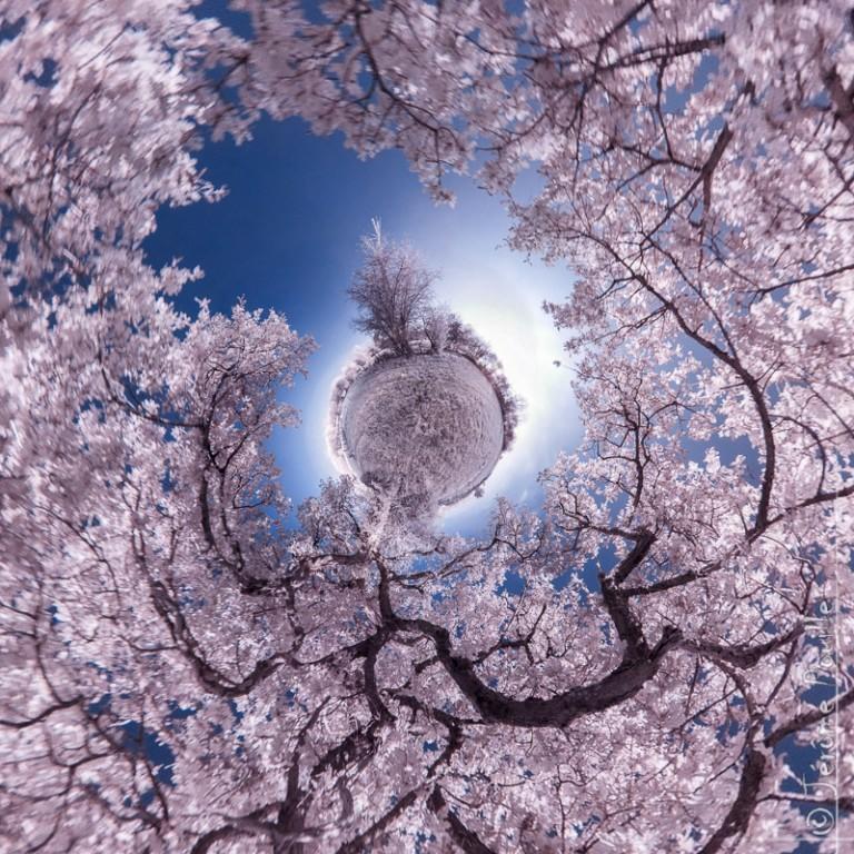 Petite planete infrarouge de «l'arbre monde»