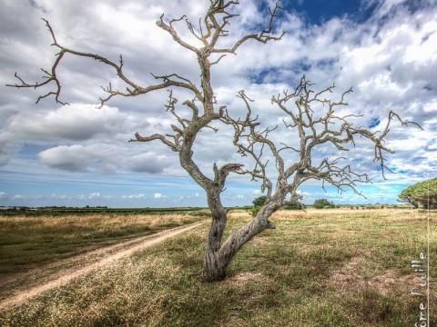 Un arbre mort…