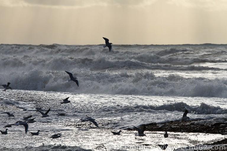 Tempête Joachim sur la côte d'Opale en décembre 2011-36