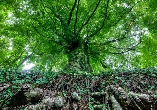 L'arbre racine – 2