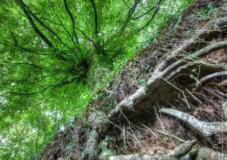 L'arbre racine – 1