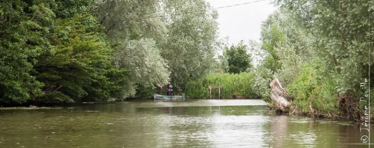 Dans le Marais Audomarois, juillet 2012