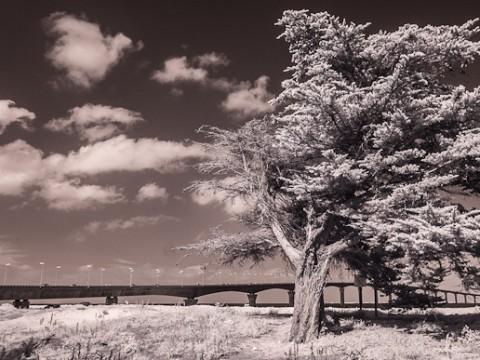 Le pont de l'île de Ré infrarouge