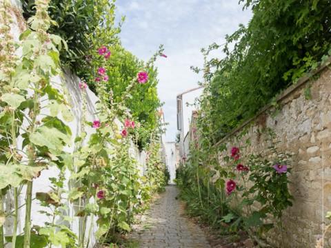Ruelle dans Saint-Martin-de-Ré