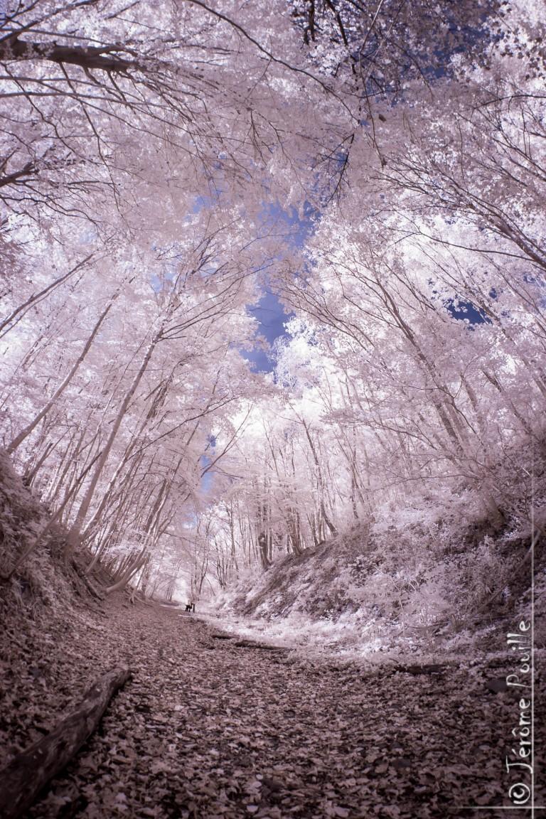Sentier de la Lawe (Beugin, 62) – Infrared