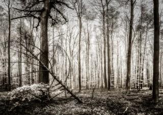 Bois de Hal, avril 2015