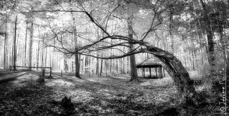 Hallerbos INFRARED (panoramique)