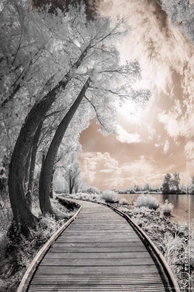 Chemin de la ballastière