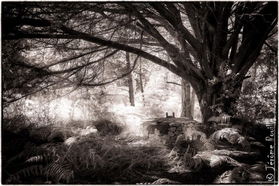 Fairy undergrowth-INFRARED