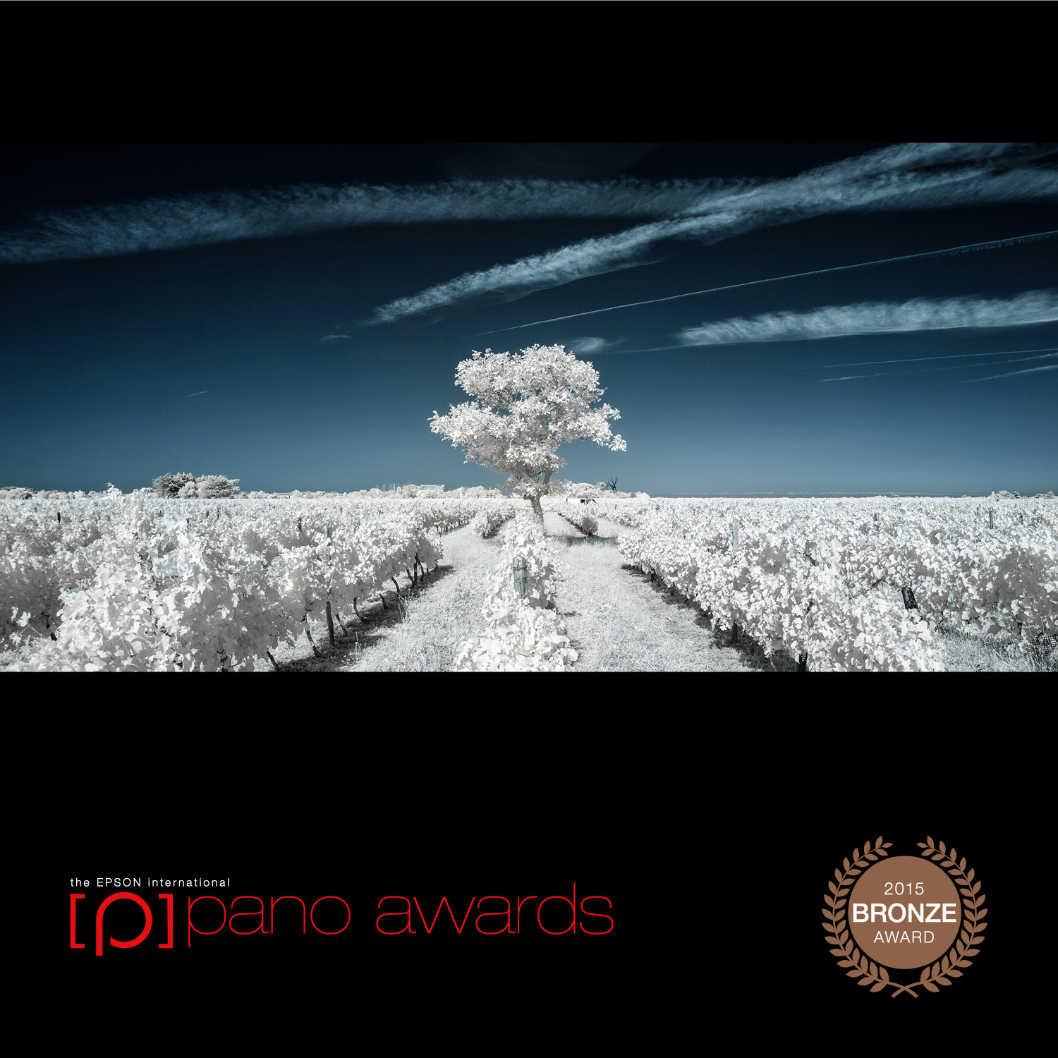 2015-Epson-Pano-Awards-Bronze-Social-705