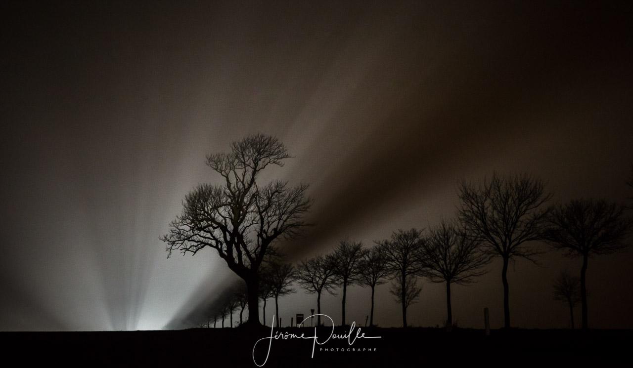Un soir, par 4 degrés. Une route, un arbre, une voiture arrive...