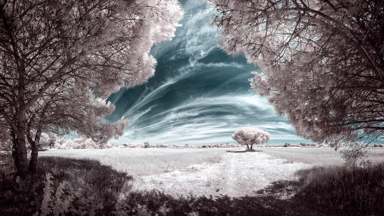 prise de vue infrared